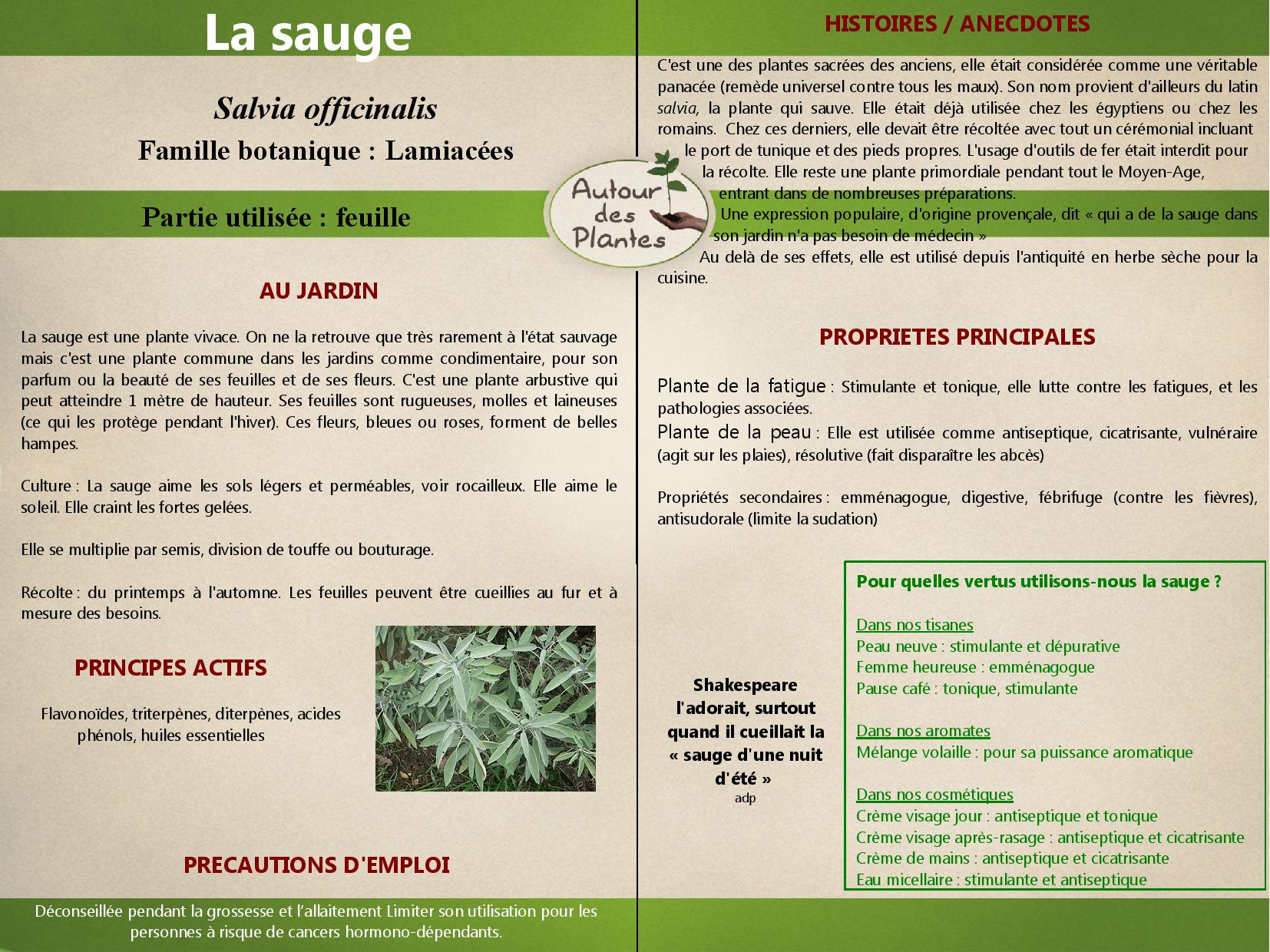 La sauge page 001