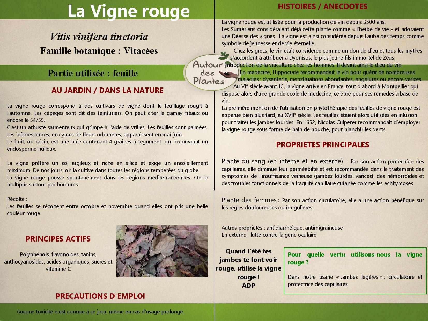 La vigne rouge page 001