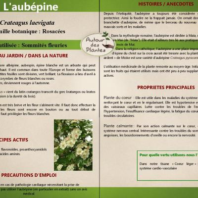 Laubepine page 001