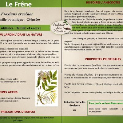 Le frene page 001