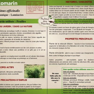 Le romarin page 001