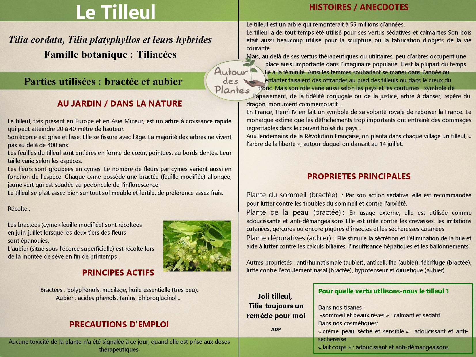 Le tilleul page 001