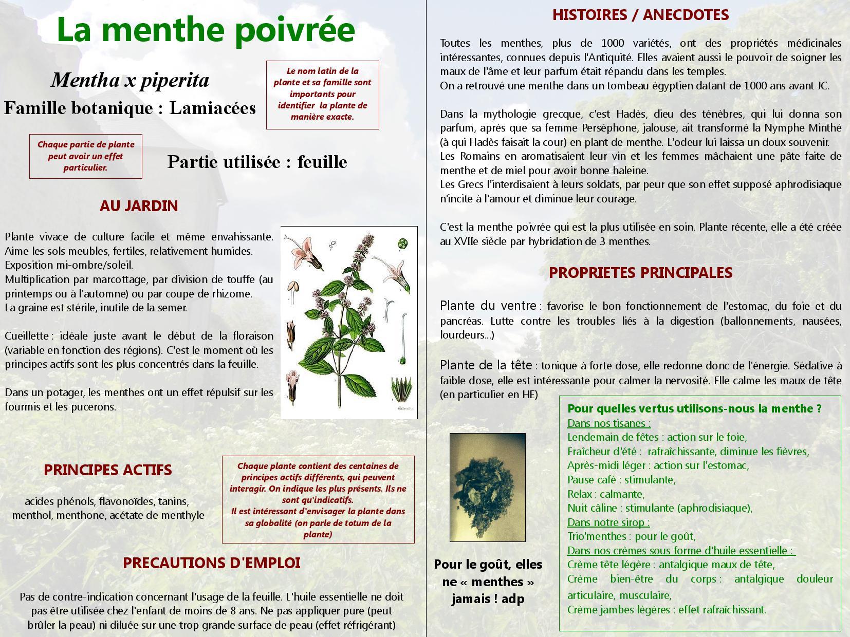 Menthe poivree page 001