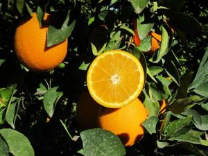 Produit orange navel 768x576