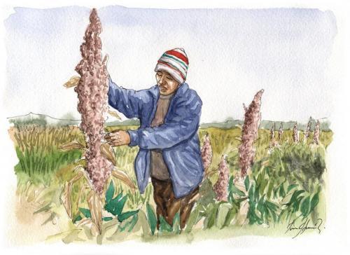 Quel est l origine du quinoa 500